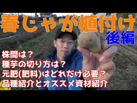 , title : '春ジャガイモ植付け 後編 種芋の切り方は?肥料(元肥)はどれだけやればいいの?