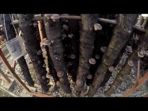 สารพิษของ Giardia