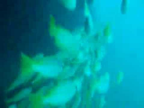Dredger Wreck, Mahe,Beau Vallon,Dedger Wreck,Seychellen
