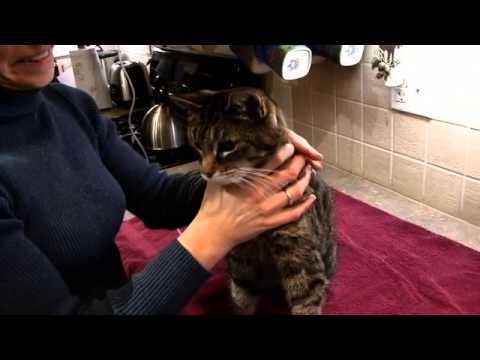 Video Cat Owner's Guide to Kidney Diseases - Part 2