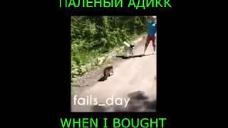 КОШКА РАЗБИРАЕТСЯ/ЛЮТЫЕ ПРИКОЛЫ