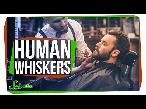 Why Don't Humans Have Whiskers?
