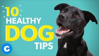 10 Healthy Dog Tips To Help Your Dog Live Longer   Chewy