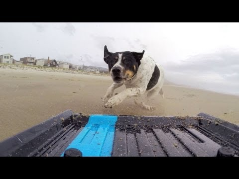 GoPro: Dog vs. Mini Truck
