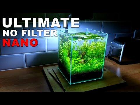 ULTIMATE NANO Aquarium (How To: 2 Gallon Fish Tank    No Filter, No Heater, No Ferts, No co2)