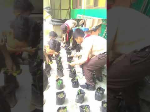 Siswa sedang melaksanakan kegiatan pembelajaran menanam kangkung