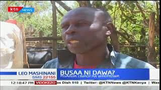 Wafugaji Nakuru watumia pombe ya busaa kutibu ng'ombe wao