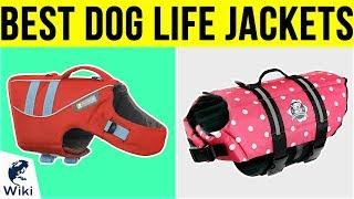 10 Best Dog Life Jackets 2019