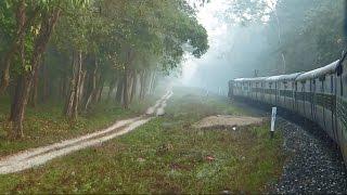 TRAIN Ride Through DENSE Jungle : Indian Railways