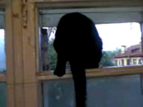 貓假扮狗叫!被主人抓包後…