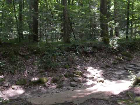 The walk from the campsite to the main trail is a short distance.