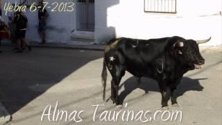 preview picture of video 'Yebra encierro por sus calles 6 7 2013'
