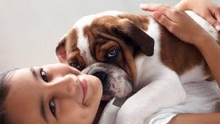 Зубы Каких Собак Нужно Обязательно Чистить?Белые Зубы у Собаки.Чистить Зубы Собаке.Говорит ЭКСПЕРТ