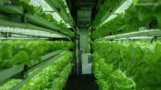 Here's how indoor farming can help feed 9.1 billion people by 2050: