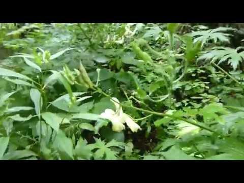 Viermi și papiloame