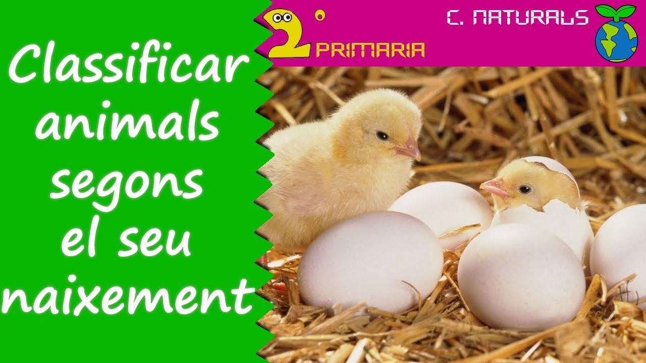 Ciències de la Naturalesa. 2n Primària. Tema 4. Classifiquem els animals segons com naixen