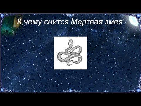 К чему снится Мертвая змея (Сонник)