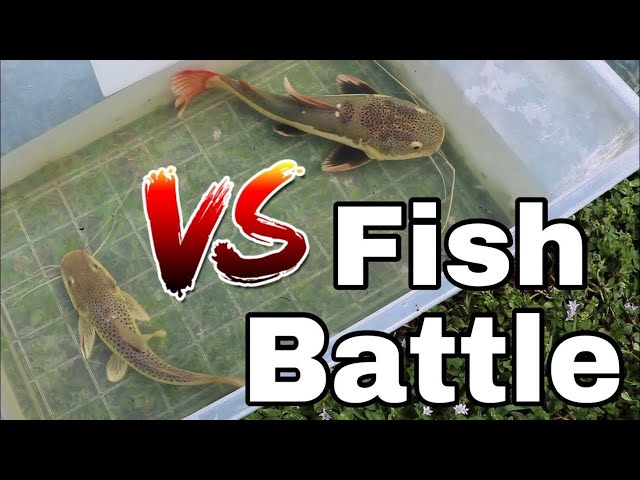 MEGA FISH BATTLE IN PLASTIC TUBE!