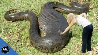 Search For The World's Biggest Snake! SnakeBytesTV