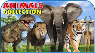 Animals Finger Family | Finger Family Collection Nursery Rhymes Collection for Children