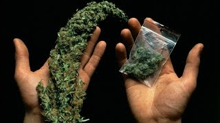 21+ BBC . В чем вред марихуаны.  Cannabis - What