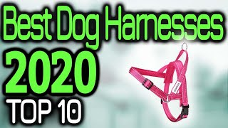 Best Dog Harnesses 2020 🏆🥇💯 TOP 10