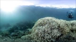 Great Barrier Reef survey shows 93% of reef bleached