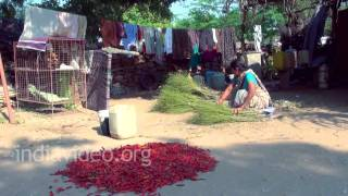 Chilli Powder Making, Andhra Pradesh