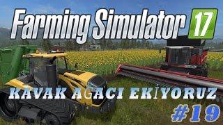 FARMİNG SİMULATOR 17 TÜRKÇE | KAVAK AĞACI EKİYORUZ | #19