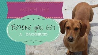 Dachshunds: So... You Want To Get A Sausage Dog