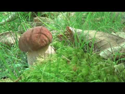 Che ammorbidire un fungo di ununghia