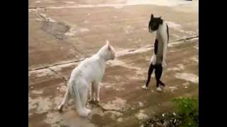 Fail Compilation Vol2  Funny And Crazy Animals