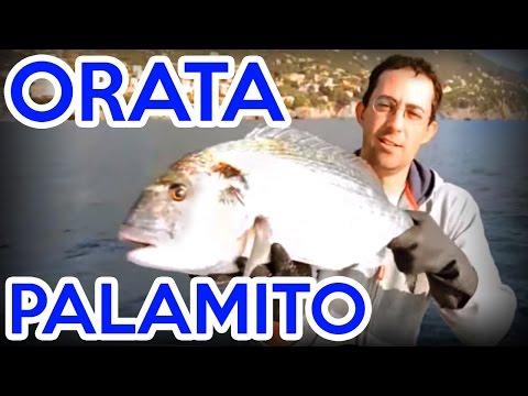 La pesca nellinverno su Bratsk
