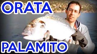 Pesca dell'orata col palamito (completo)