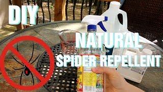 DIY  Natural Spider Repellent