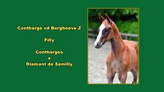 Contharga vd Berghoeve Z