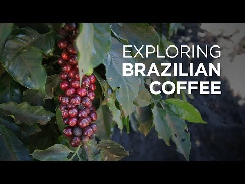 Exploring Brazilian Coffee at Daterra Coffee Farm | European Coffee Trip