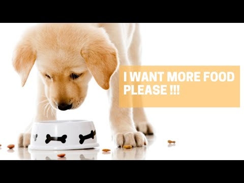 Try Not To Laugh With Pets Funny Moments #3 #shorts