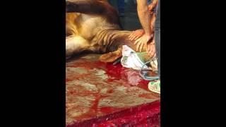 kurban kesimi 2016 sultangazi