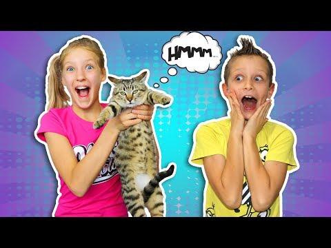 We spent $1000 on Cat Toys!!!