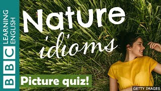 A picture quiz about English idioms: Nature