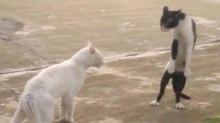 Bláznivé kočky. Funny Cats.