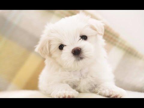 Σκυλιά που λένε I love you!