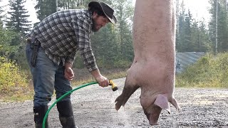 Farm to Table: Killing and Butchering a Pig at home