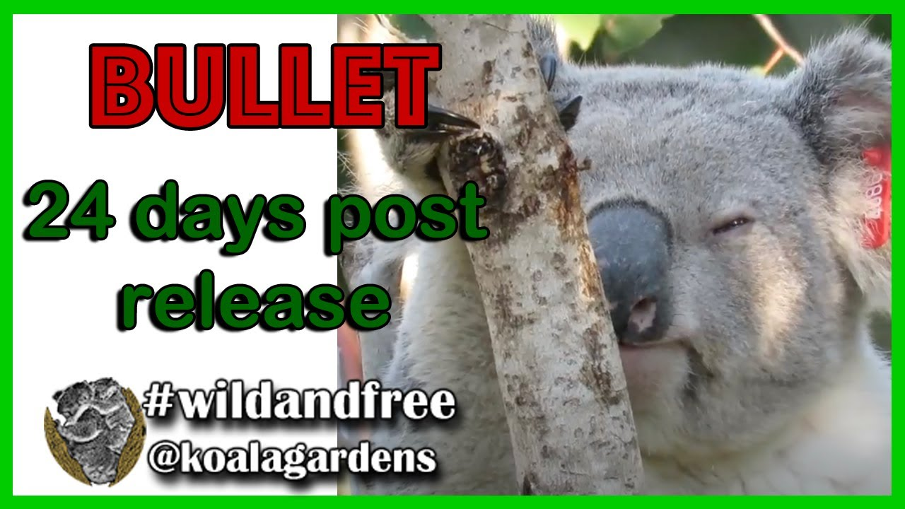 Bullet 24 days post release