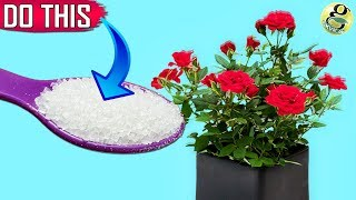 GARDEN SECRETS TO GET 500% MORE FLOWERS | 10 Surefire Ways To Boost Blooms