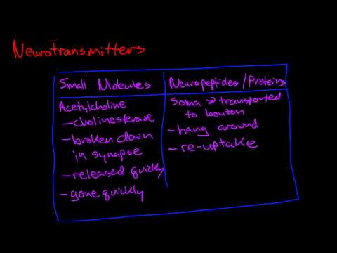 Introduction To Neurotransmitters