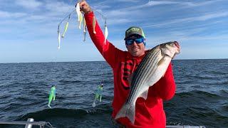 STRIPED BASS aka ROCKFISH Catch Clean & Cook