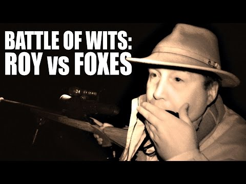 Battle of wits: Roy vs Foxes