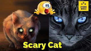 Cute and funny cat videos -Tik Tok #10